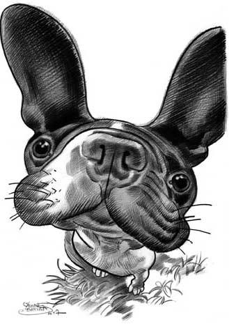DeBiasi-caricature-chien